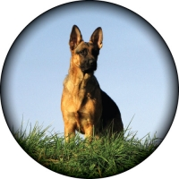 German Shepherd Printed Wheel Cover