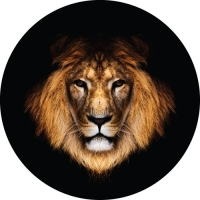 Lions Stare Custom Spare Wheel Cover Design