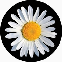 Daisy photo on your spare wheel cover