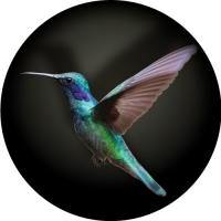 Hummingbird Spare Tyre Cover Design