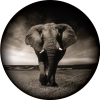 Travelling Elephant spare wheel cover design