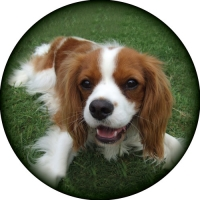 Cavalier King Charles Spare Wheel Cover Design