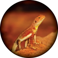 Outback Lizard Spare Wheel Cover