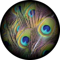 Full Colour Peacock Feathers on your spare tyre cover