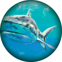 Great white shark swimming out from spare wheel cover