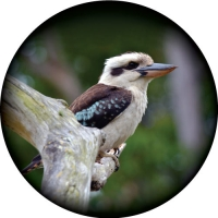 Kookaburra Spare Tyre Cover