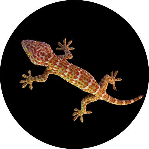 Gecko Spare Tyre Cover Design