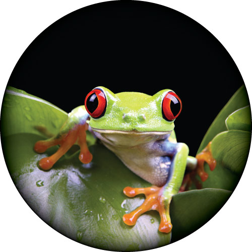 Frog On My Cover