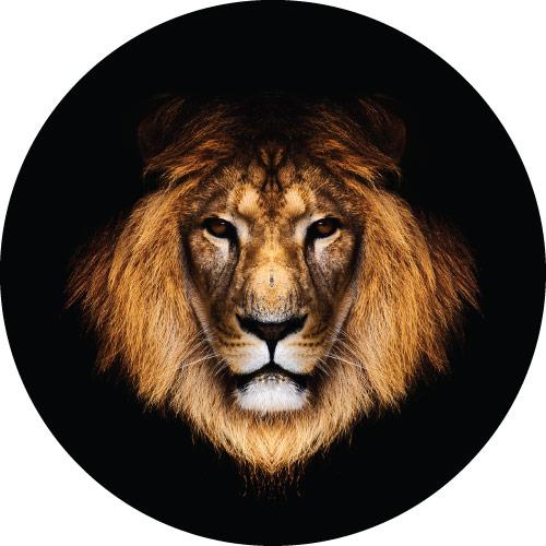 Lions Stare Custom Spare Wheel Cover Design